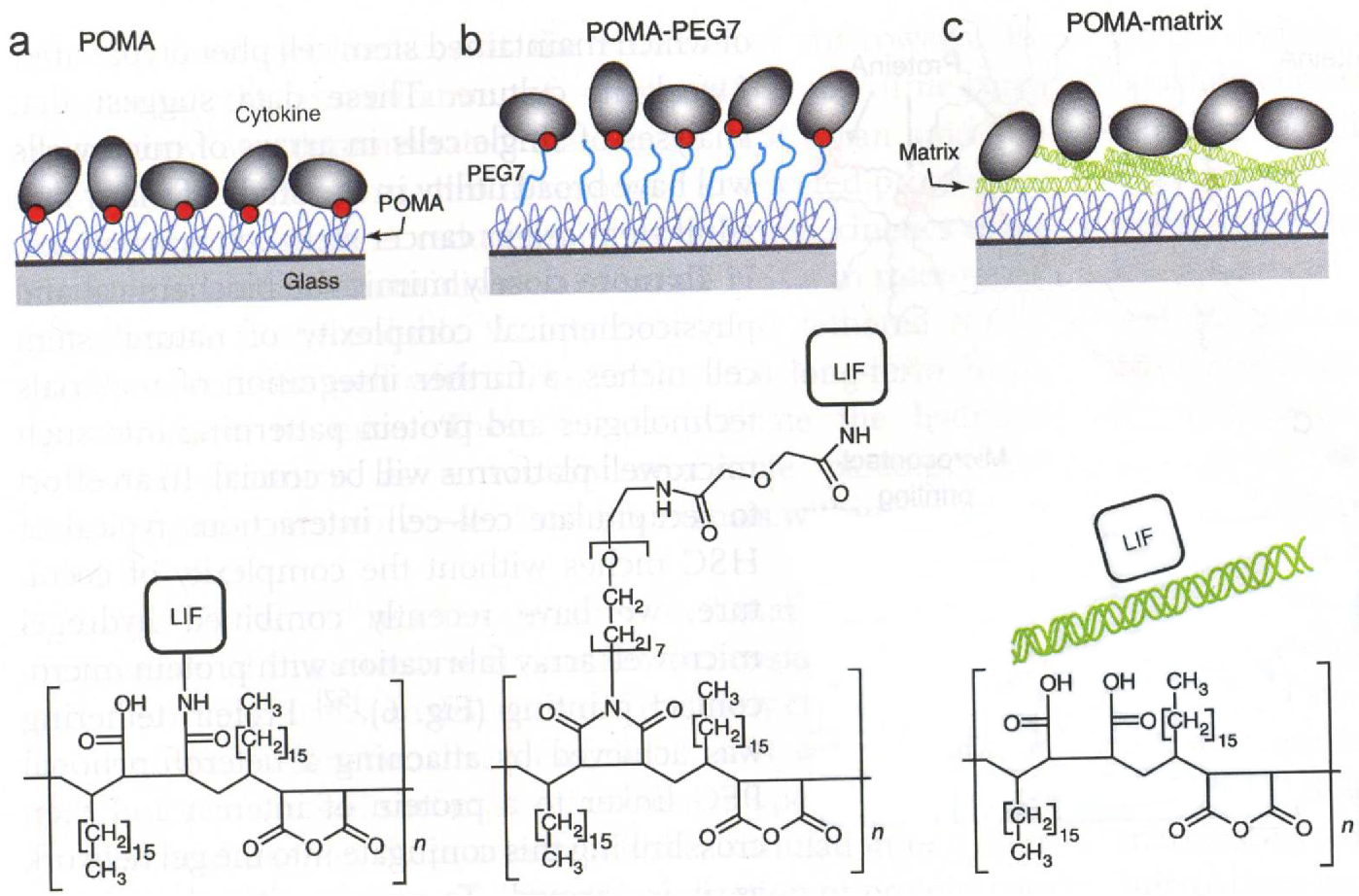 Figure 4 From Artificial Stem Cell Niches Semantic Scholar