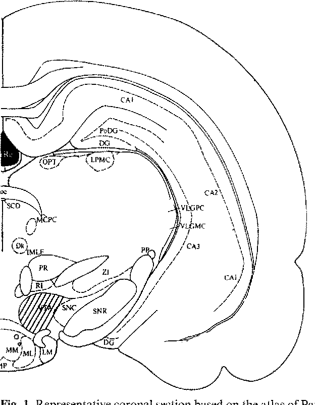 Figure 1 From Opioid Agonists And Endogenous Enkephalins Induce