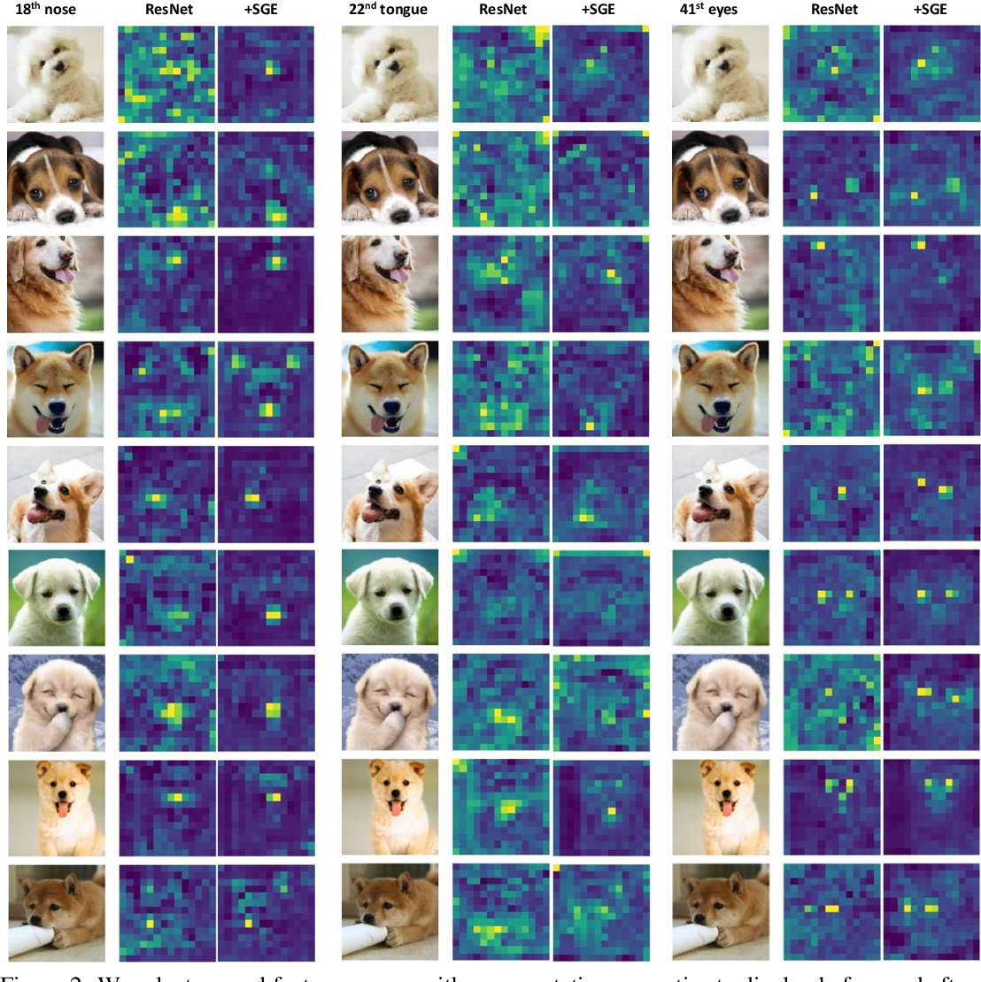 Figure 3 for Spatial Group-wise Enhance: Improving Semantic Feature Learning in Convolutional Networks