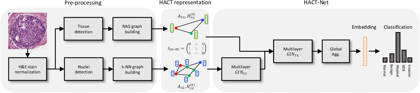 Figure 1 for HACT-Net: A Hierarchical Cell-to-Tissue Graph Neural Network for Histopathological Image Classification
