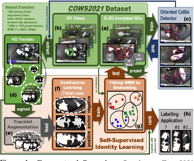 Figure 1 for Towards Self-Supervision for Video Identification of Individual Holstein-Friesian Cattle: The Cows2021 Dataset