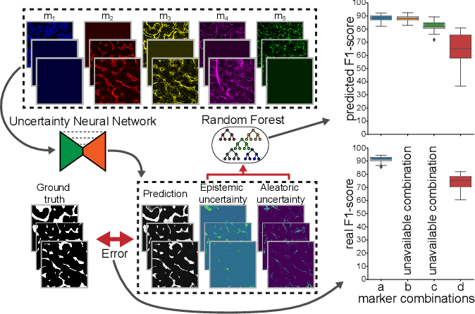 Figure 1 for Utilizing Uncertainty Estimation in Deep Learning Segmentation of Fluorescence Microscopy Images with Missing Markers