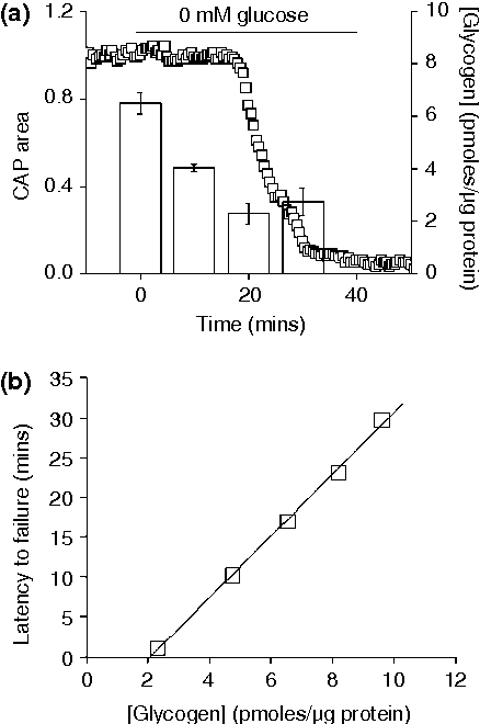 Fig. 4 Glycogen content determines latency to functional failure during aglycaemia. (a) In mouse optic nerve (MON) aglycaemia resulted in delayed functional failure, recorded as the stimulus evoked compound action potential (CAP), and with continued glucose deprivation the CAP fell rapidly to zero. On exposure to aglycaemia glycogen content fell until it reached its nadir at 20 min, coinciding with CAP failure. The left axis indicates CAP area (open squares) and the right axis indicates the glycogen content on the MONs (open columns). Error bars indicate the SEM. (b) The straight line is a best fit of data points (open squares), and indicates the relationship between glycogen content immediately prior to aglycaemia and latency to onset after aglycaemia onset (from Brown et al. 2003).