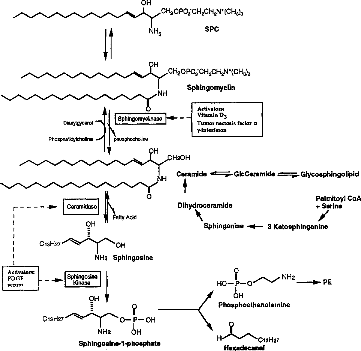 Fig. 1. Sphingolipid metabolic pathways leading to the formation of sphingosine, SPP, and ceramide, putative intracellular second messengers. The influences of growth regulators are indicated. Modified with permission from (Spiegel et al., 1994).