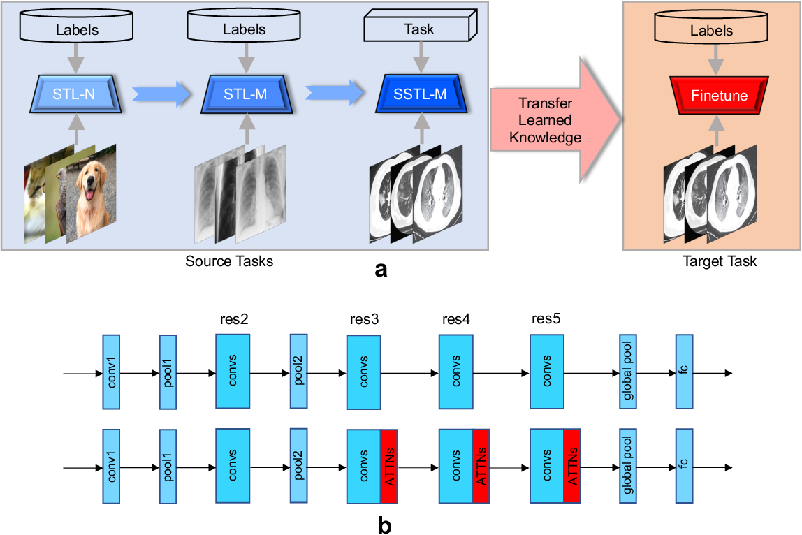 Figure 1 for A Multi-Stage Attentive Transfer Learning Framework for Improving COVID-19 Diagnosis