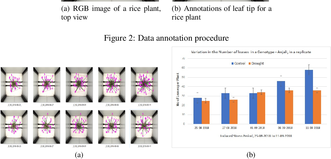 Figure 2 for Image-based phenotyping of diverse Rice (Oryza Sativa L.) Genotypes