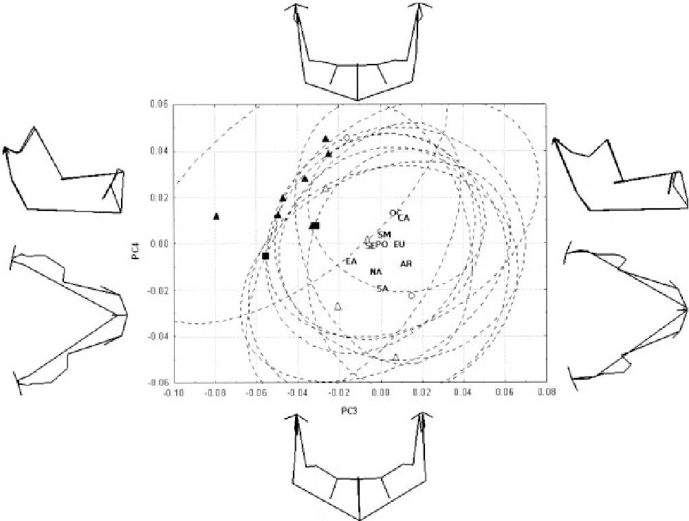 Quantitative Analysis Of Human Mandibular Shape Using Three