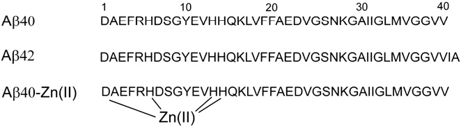 FIGURE 1 Amino-acid sequence of Ab40 and Ab42, with the main coordination sites of zinc (Asp1, His6, His13, and His14) highlighted.