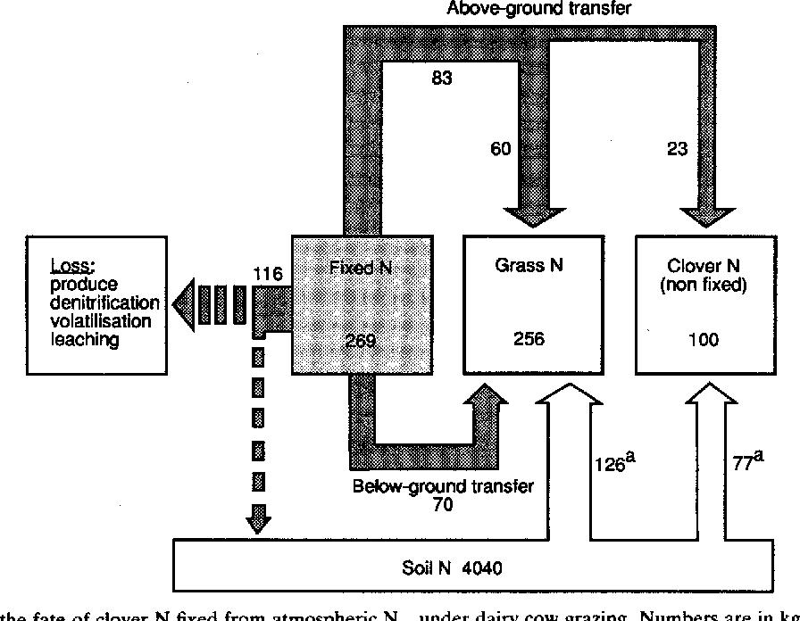 transfer of fixed nitrogen from white clover to associated grasses hop clover white clover diagram #28