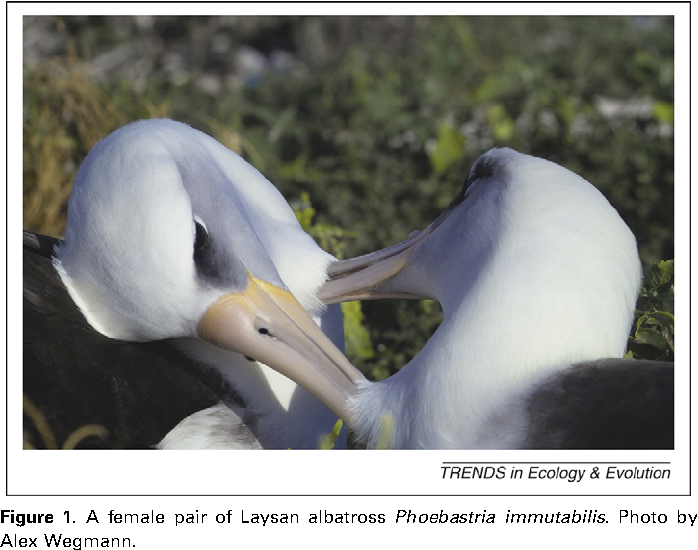 Laysan albatross homosexuality in christianity