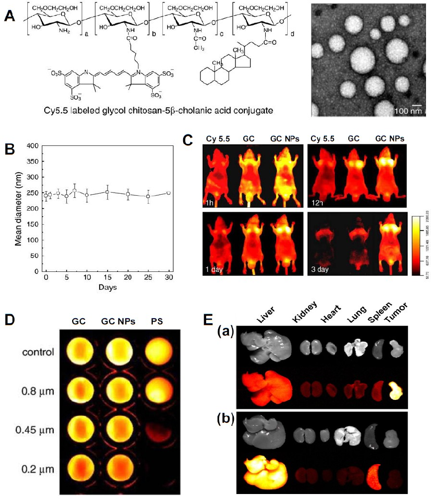 Figure 3. (A) Chemical structure of Cy5.5-labeled glycol chitosan-5β cholanic acid conjugates and TEM image; (B) Colloidal stability of Cy5.5-labeled GC NPs in PBS for one month; (C) Time-dependent tumor targeting specificity of free Cy5.5, water soluble Cy5.5-labeled glycol chitosan polymer, and Cy5.5-labeled GC NPs in SCC7 tumor-bearing mice; (D) Filtration test of Cy5.5-labeled glycol chitosan polymer, Cy5.5-labeled GC NPs, and Cy5.5-labeled polystyrene beads with different pore sizes; (E) Ex vivo organ distribution of (a) Cy5.5-labeled GC NPs and (b) Cy5.5-labeled polystyrene beads. Reprinted with permission from [31] and [33], Copyright © 2011 and 2010 Elsevier.