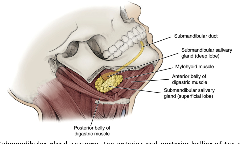 Figure 2 from Salivary gland emergencies. - Semantic Scholar