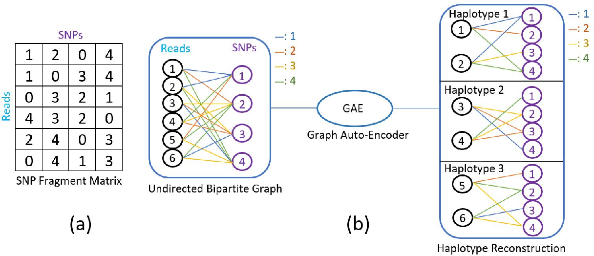 Figure 1 for A Graph Auto-Encoder for Haplotype Assembly and Viral Quasispecies Reconstruction