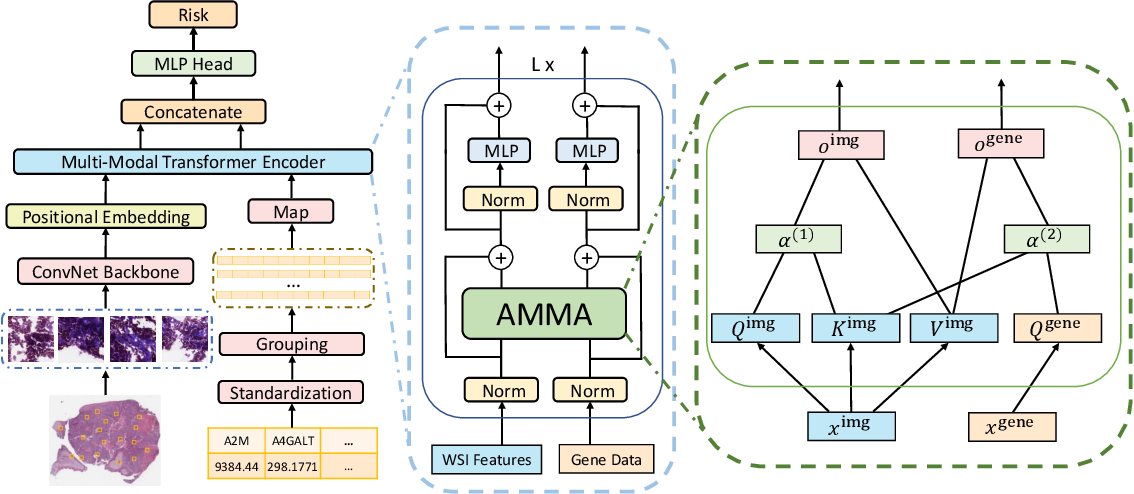 Figure 1 for AMMASurv: Asymmetrical Multi-Modal Attention for Accurate Survival Analysis with Whole Slide Images and Gene Expression Data