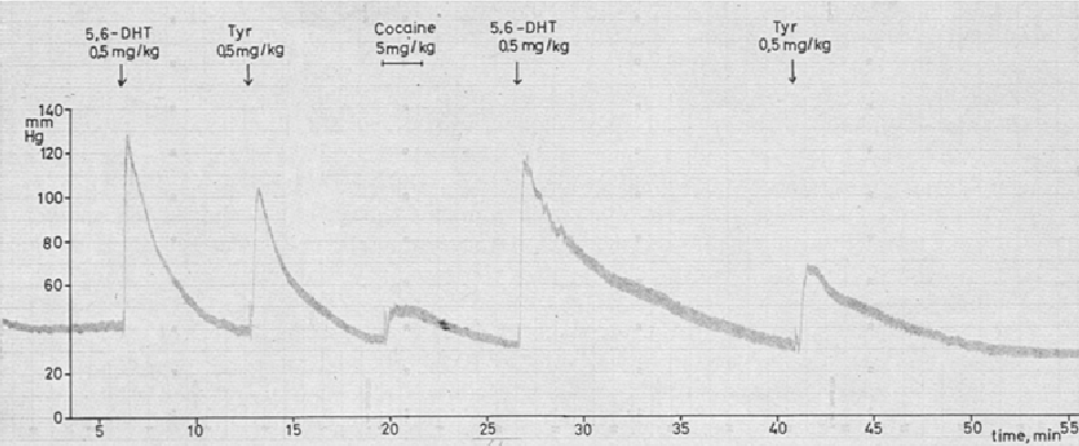 Fig. 1. Time course of pressor effect of 5,6-dihydroxytryptamine (5,6-DHT) and tyramine (Tyr) in the pithed rat preparation before and after cocaine (5 mg/kg i.v.)
