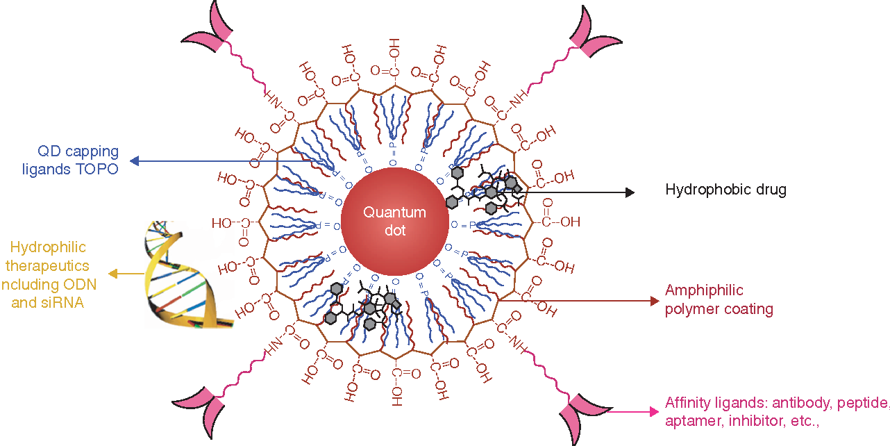 Emerging Application Of Quantum Dots For Drug Delivery And Therapy
