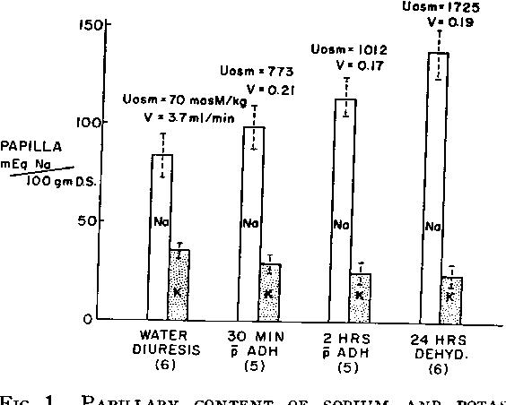 Composition of the renal medulla during water diuresis. - Semantic ...