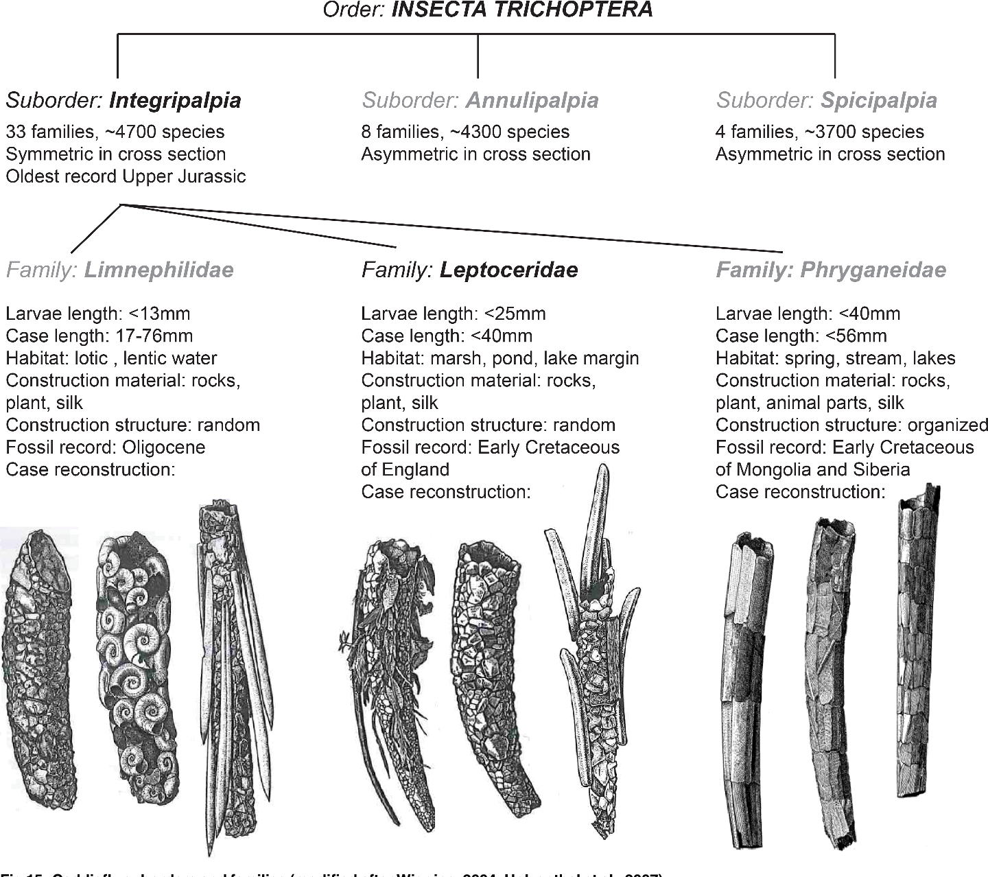 Fig 15. Caddisfly suborders and families (modified after Wiggins, 2004; Holzenthal et al., 2007).