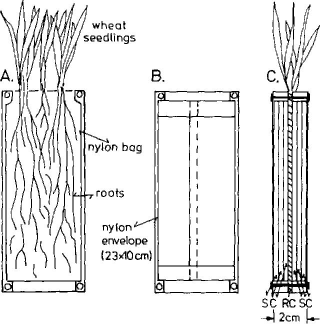 Effect of root exudates on mobilization in the rhizosphere and figure 1 ccuart Image collections