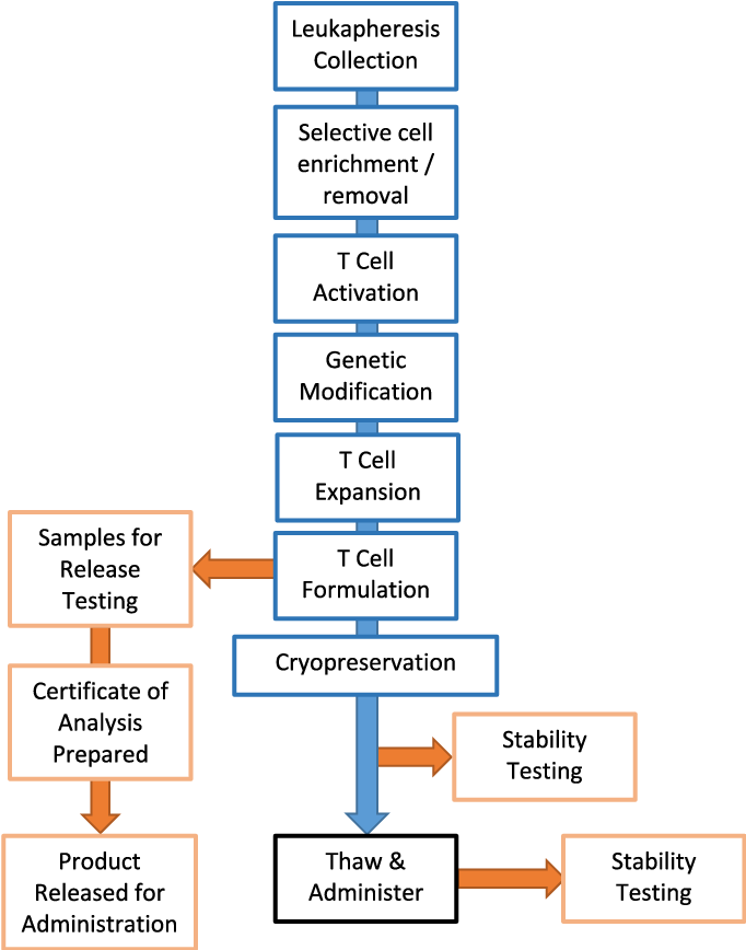 Figure 1 From Gmp Car T Cell Production Semantic Scholar