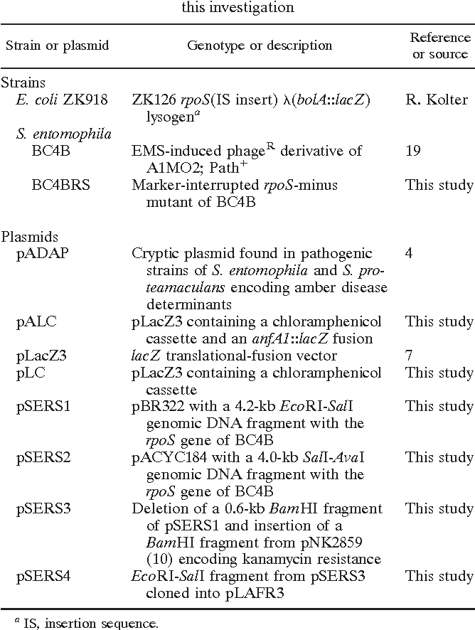 TABLE 1. Bacterial strains and plasmids used during this investigation