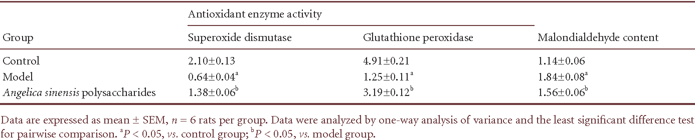 Table 1 Effect of Angelica sinensis polysaccharides on antioxidant enzyme activity (U/mg) and malondialdehyde content (nmol/mg) in rats with middle cerebral artery occlusion