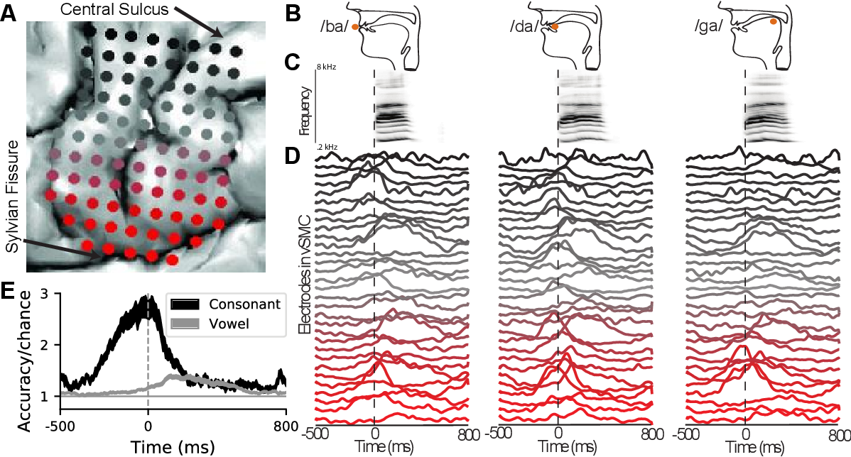 Figure 1 for Deep learning as a tool for neural data analysis: speech classification and cross-frequency coupling in human sensorimotor cortex