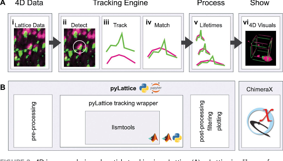 Figure 3 from 4D cell biology: big data image analytics and