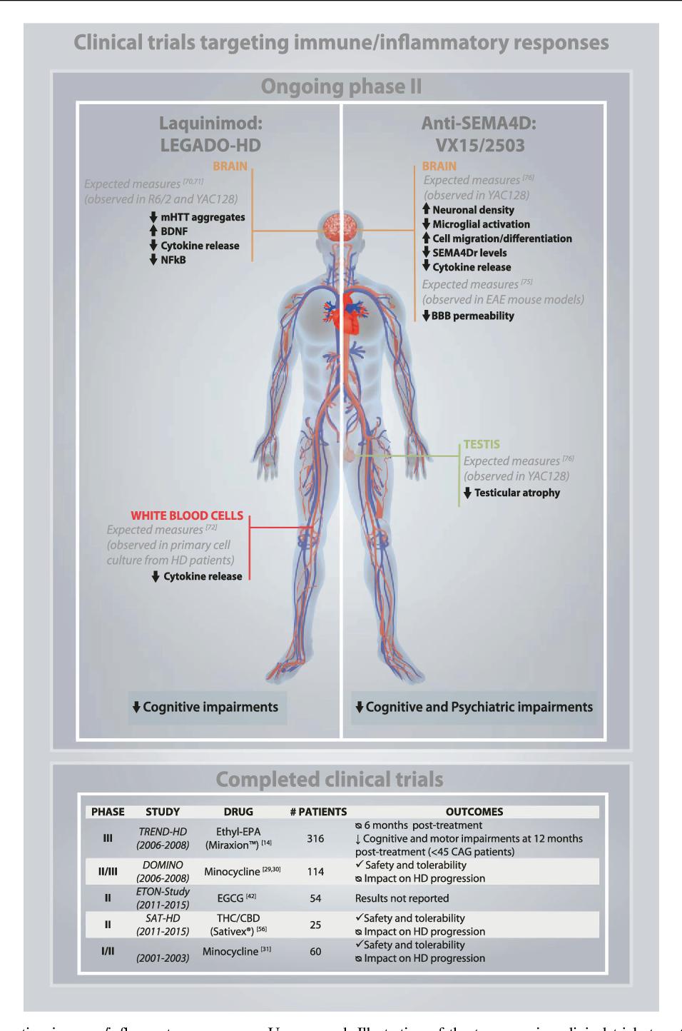 Nett Anatomie Des Graus Zeitgenössisch - Anatomie Ideen - finotti.info