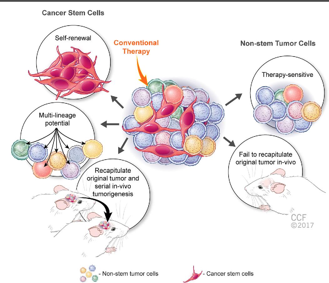 Adult Brain Tumor Consortium