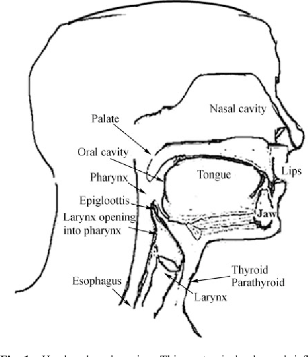 Diagram Of Nasal Gland
