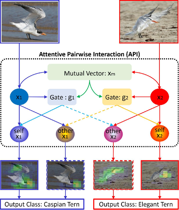 Figure 1 for Learning Attentive Pairwise Interaction for Fine-Grained Classification