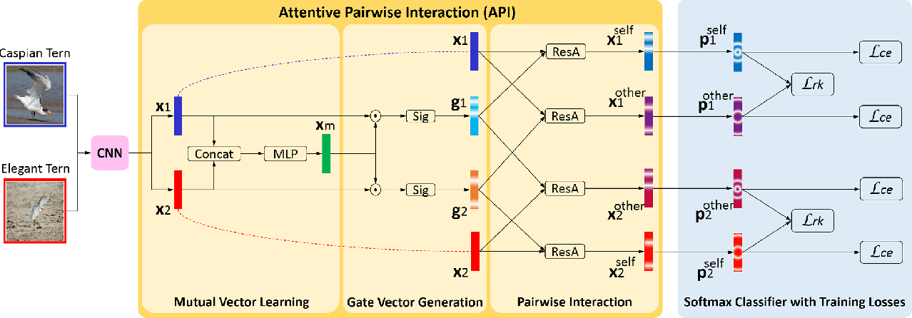 Figure 3 for Learning Attentive Pairwise Interaction for Fine-Grained Classification