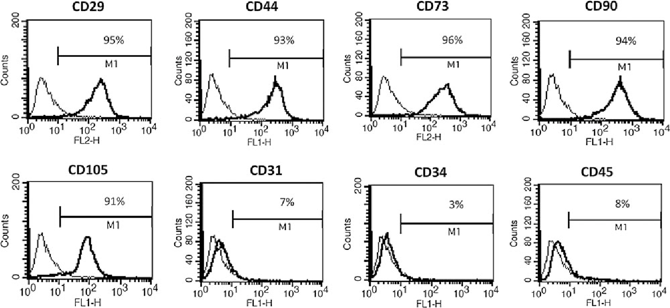 FIG. 1. Flow cytometric analysis of various surface markers in rat adipose-derived adult stem cells (ASCs). The results showed that cells were negative for CD31, CD34, and CD45 and positive for CD29, CD44, CD73, CD90, and CD105.