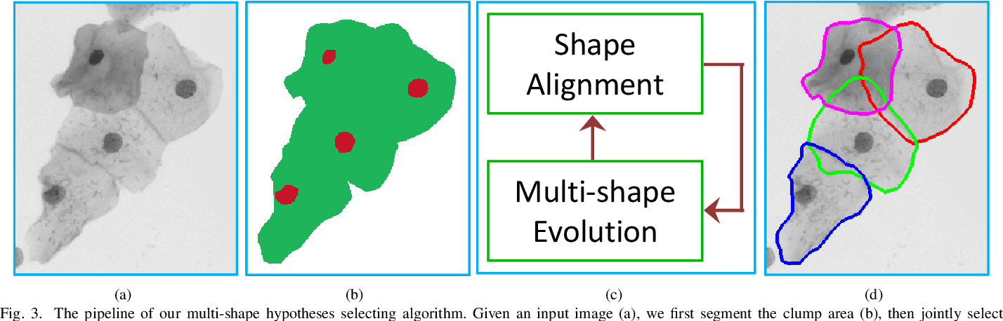 Figure 3 for Constrained Multi-shape Evolution for Overlapping Cytoplasm Segmentation