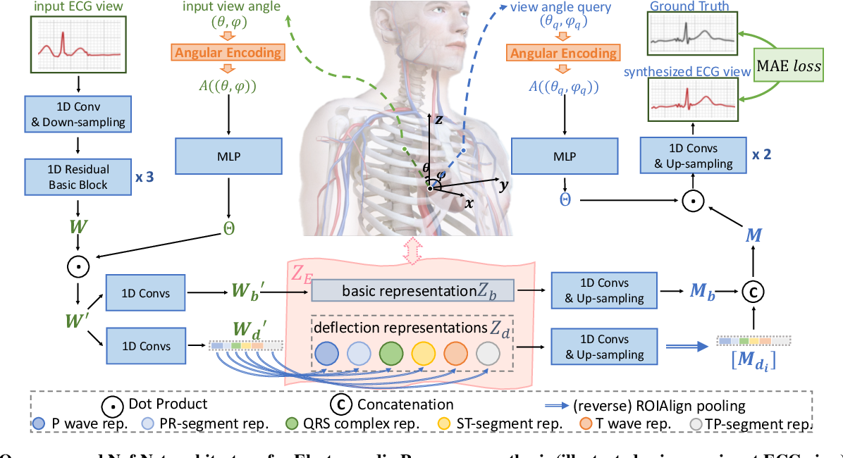 Figure 3 for Electrocardio Panorama: Synthesizing New ECG Views with Self-supervision