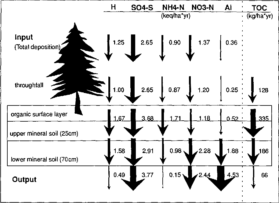 Fig. 1. Element budget of the 60-year-old Norway spruce ecosystem at Hohe Matzen site in the Fichtel Mountains/FRG (values in keqha -] yr -1, for TOC in kgha -1 yr-t) .