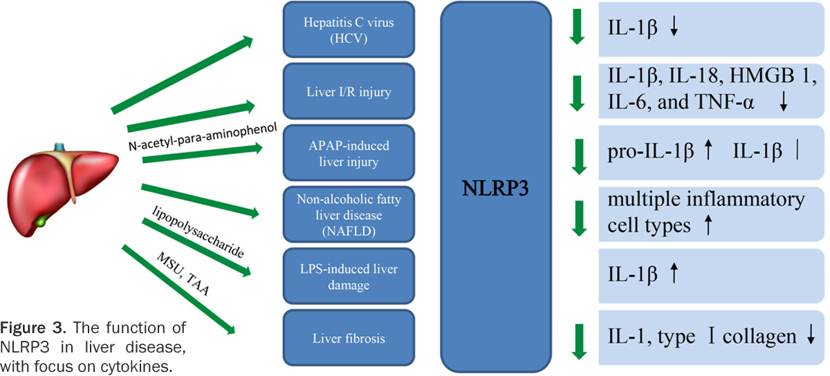 Figure 3 From New Insights Into Nod Like Receptors Nlrs In Liver
