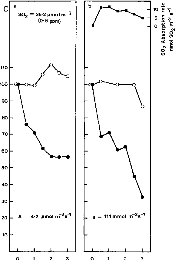 Fig. 4A-C. SO2 effects on the gas exchange of unirrigated Heteromeles arbutifolia leaves (A-C exposed) to 26.2 I~mol SOz m -3. Gas exchange cuvette conditions as in Fig. 1. Layout and symbols as in Fig. 3