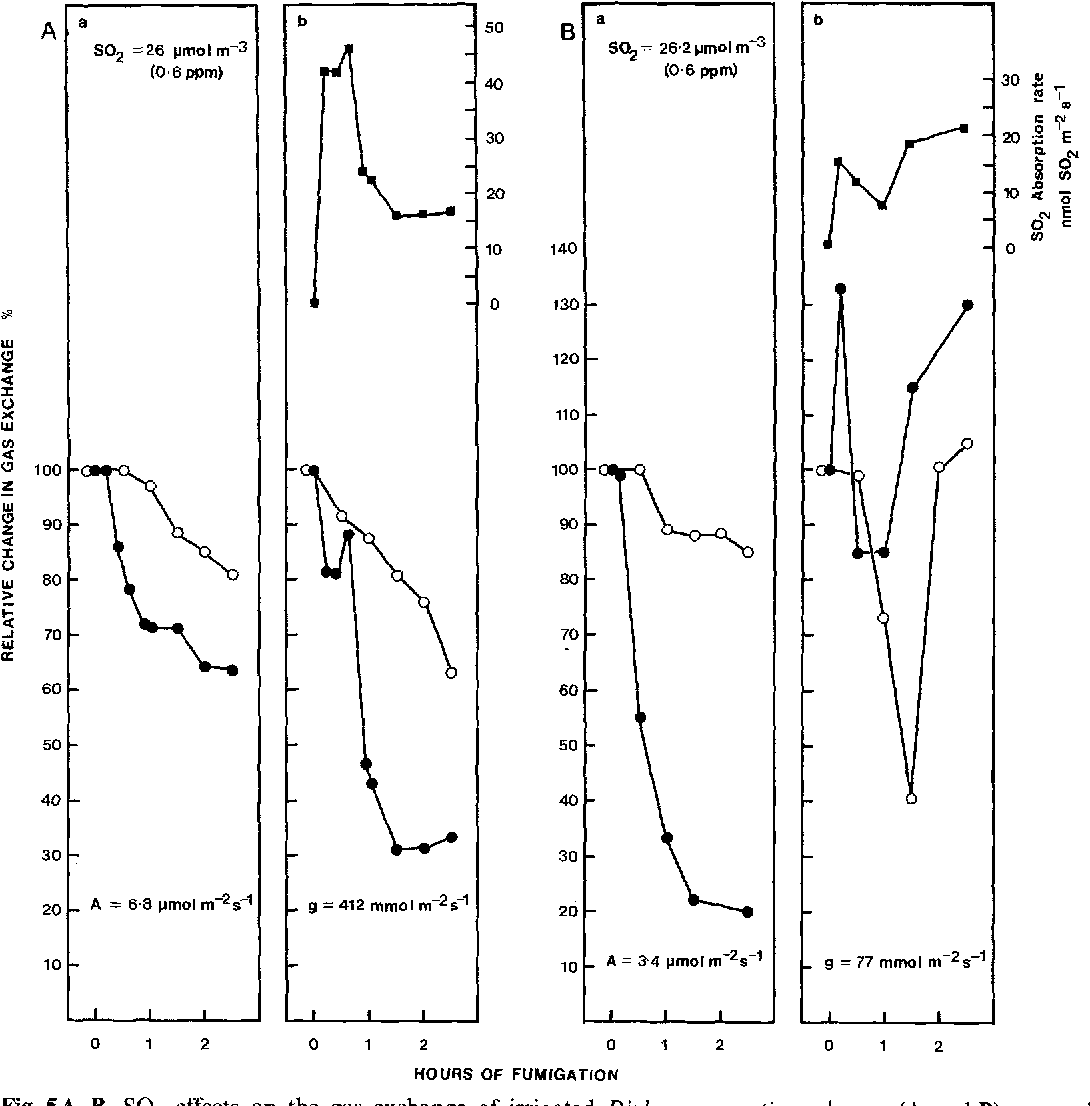 Fig. 5A, B. SO2 effects on the gas exchange of irrigated Diplacus aurantiacus leaves (A and B) exposed to 26.2 ~tmol SOz m -3 . Gas exchange cuvette conditions as in Fig. 1. Layout and symbols as in Fig. 3