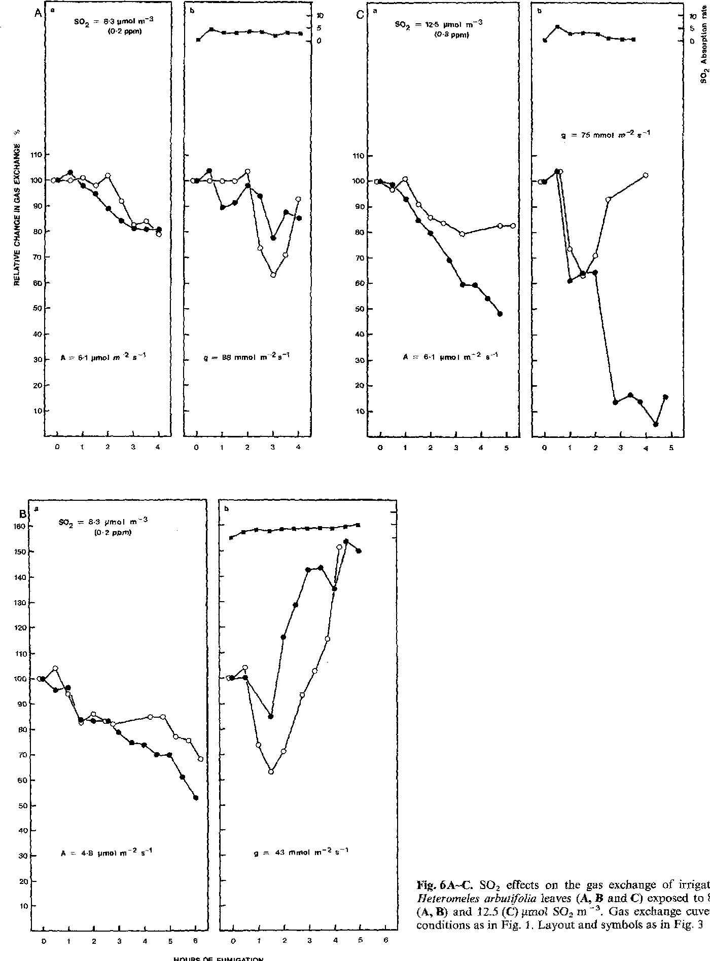 Fig, 6A-C. SO2 effects on the gas exchange of irrigated Heteromeles arbut(folia leaves (A, B and C) exposed to 8.3 (A, B) and 12.5 ((2) ~mol SO2 m -3 Gas exchange cuvette conditions as in Fig. 1. Layout and symbols as in Fig. 3
