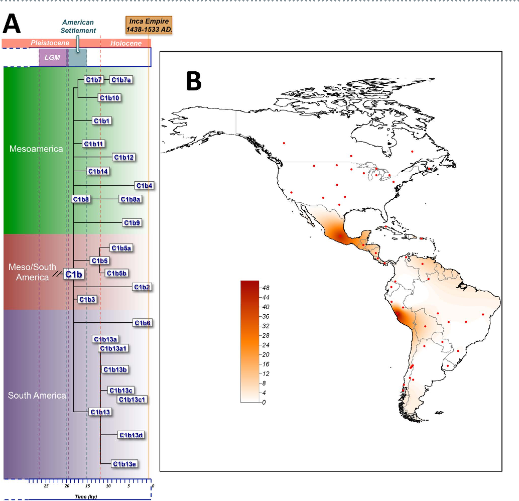 500 Year Old Map Of America.Figure 4 From The Complete Mitogenome Of A 500 Year Old Inca Child