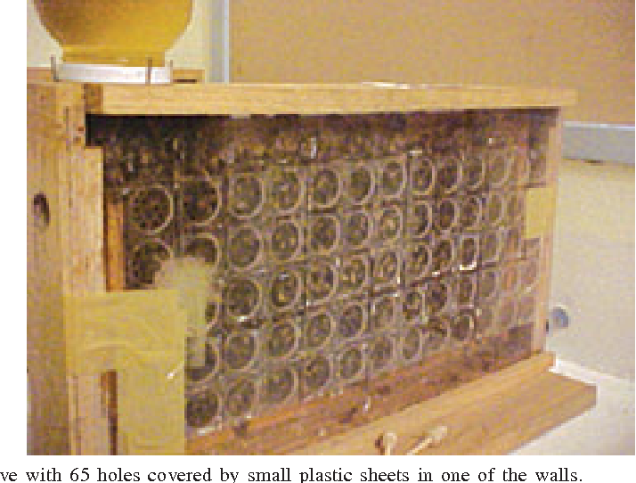 Figure 1. Observation hive with 65 holes covered by small plastic sheets in one of the walls.