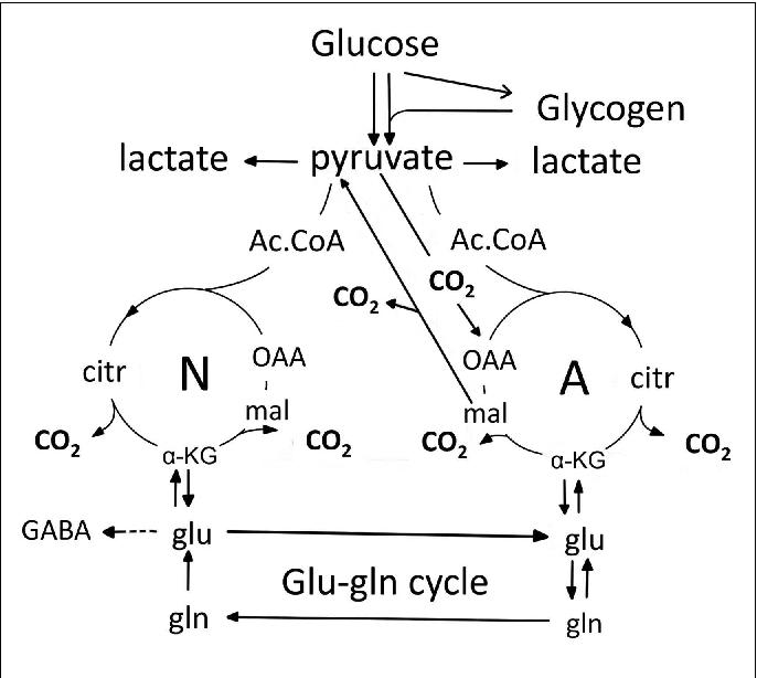 Enteral glutamine supplementation in critically ill ...
