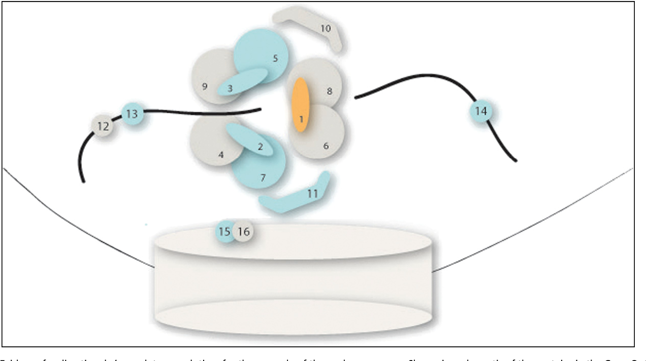 Figure 2 from Polygenic and directional regulatory evolution