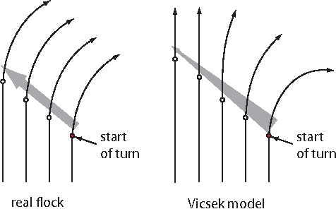 Figure 1 for Flocking and turning: a new model for self-organized collective motion