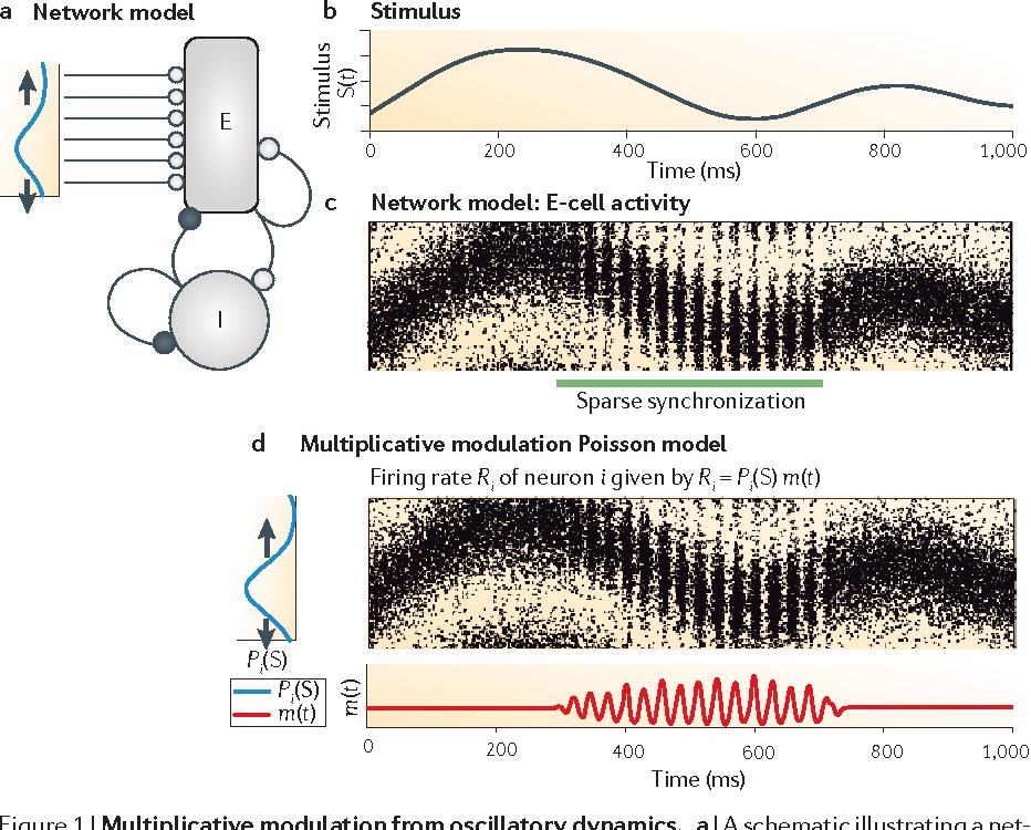Oscillatory multiplexing of population codes for selective figure 1 ccuart Image collections