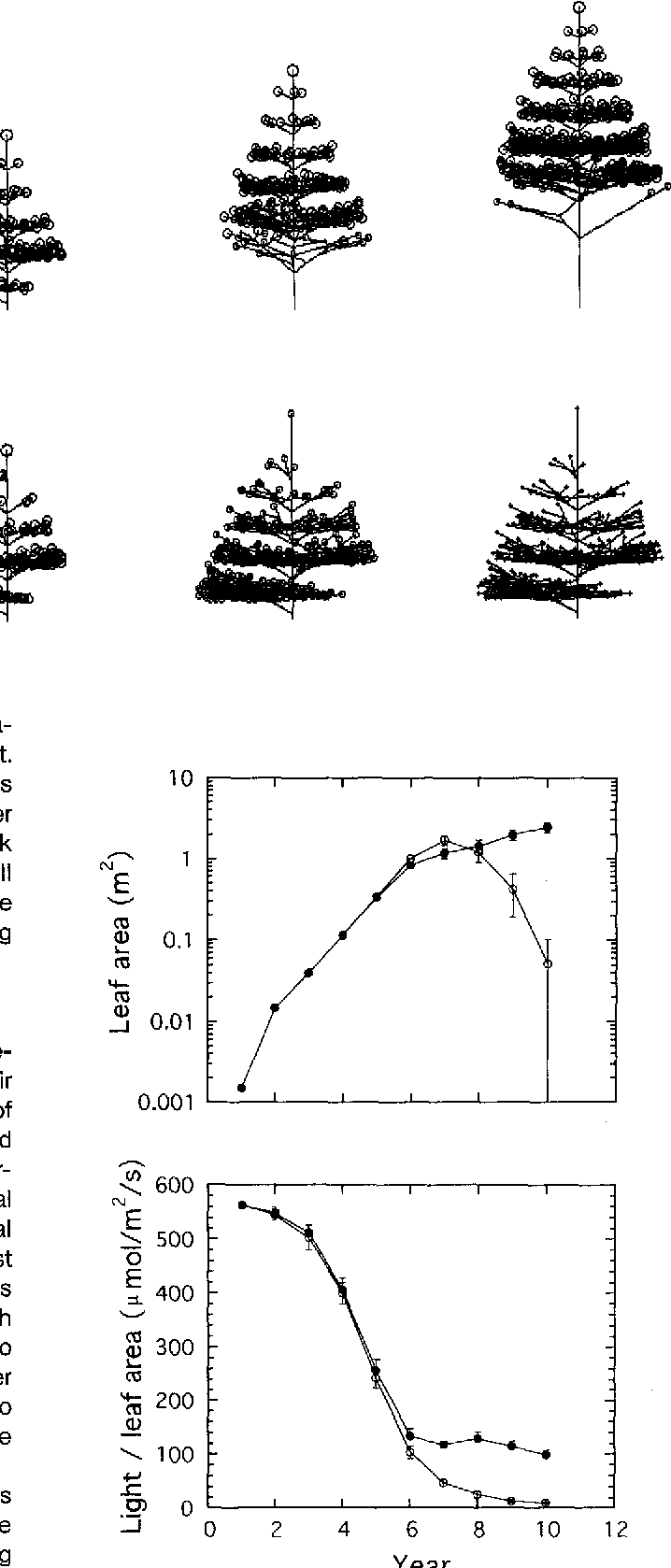 Figure 12 from A simulation model of tree architecture development