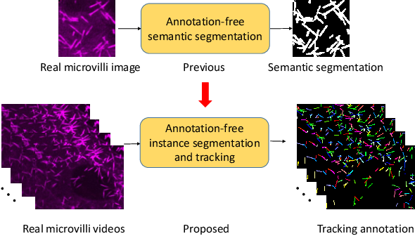 Figure 1 for ASIST: Annotation-free synthetic instance segmentation and tracking for microscope video analysis
