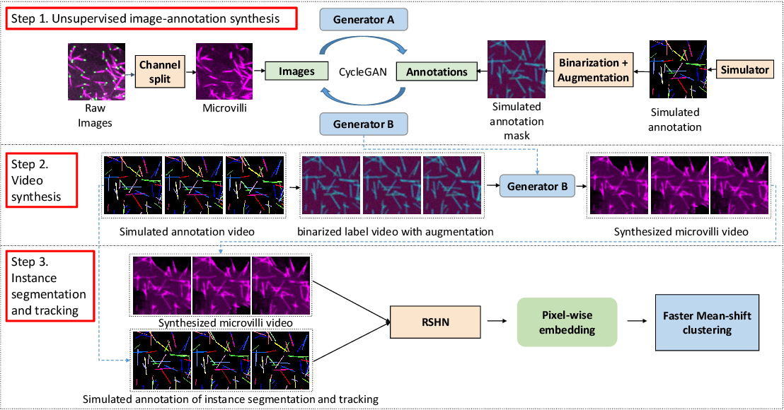 Figure 3 for ASIST: Annotation-free synthetic instance segmentation and tracking for microscope video analysis